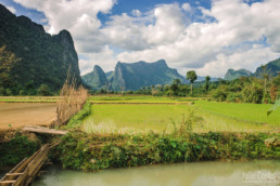 Rice fields, Vang Vieng