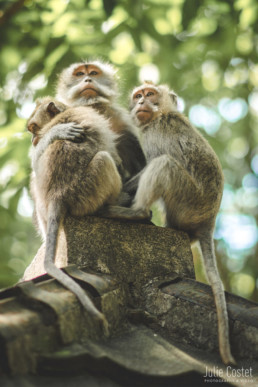 Monkeys, Ubud
