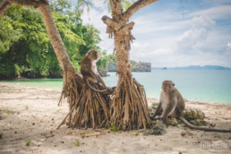 Monkeys at the beach, Landscape, Thailand